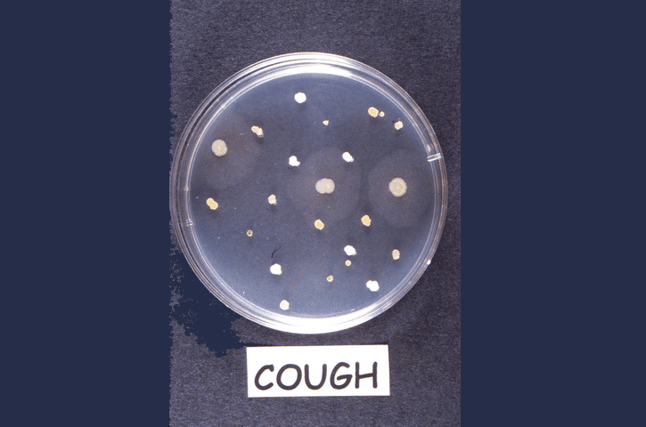 Observing Microbes Observing Bacteria In A Petri Dish