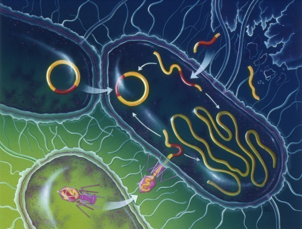 About Microbiology – Bacteria